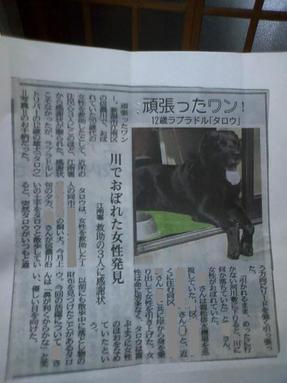Taro0001